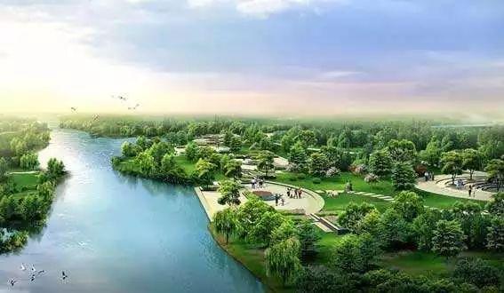 雄安新区万亩红豆杉苗景兼用林