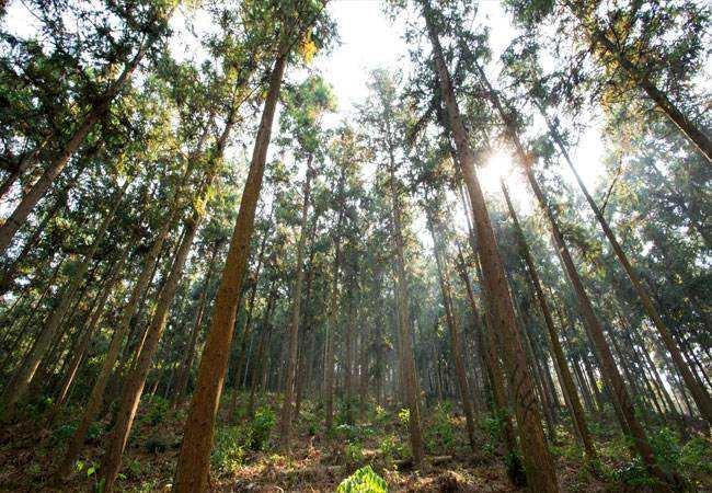 国家储备林(必威体育app手机版官网)项目